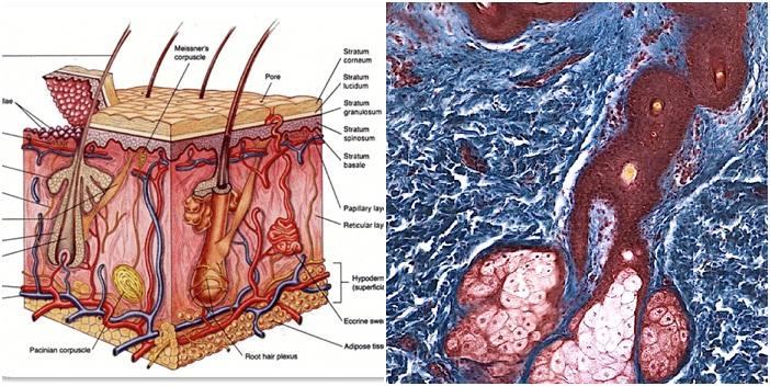 Nguyên nhân mụn thịt và cách điều trị dứt điểm chỉ sau 1 lần 3